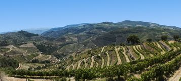 Vue de la vallée de Douro, Portugal image stock