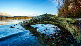 Vue de la ville de l'érable Ridge à travers Fraser River Images stock