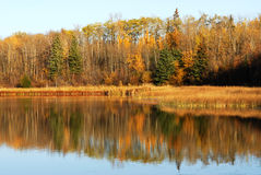 Vue de lac autumn en île d'élans Photographie stock libre de droits