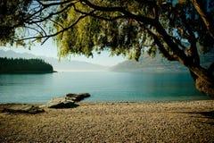 Vue de lac avec l'arbre de penchement Photographie stock