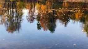 Vue de lac d'automne de forêt un jour calme ensoleillé clips vidéos