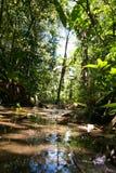 Vue de lac dans la forêt tropicale en Malaisie de perspective de grenouille photos stock