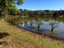 Vue de lac de camping de la Floride Photo libre de droits