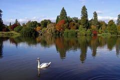 Vue de lac des arbres et du cygne automnaux Images stock