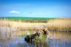 Vue de lac Srebarna Photographie stock libre de droits