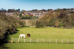 Vue de Lanscape de campagne au Royaume-Uni Image libre de droits