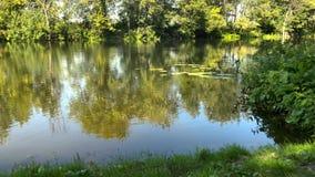 Vue de laps de temps de la rivière dans un jour d'été et une réflexion ensoleillés clairs des arbres dans l'eau l'ukraine banque de vidéos