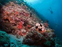 Vue de Lionfish et de récif Image stock