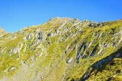Vue de lumière du jour du fond aux montagnes vertes avec des arbres Photos stock