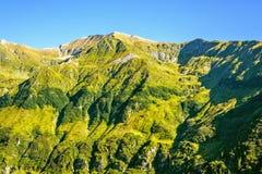 Vue de lumière du jour pour verdir des montagnes avec des arbres et des roches Images libres de droits