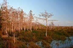 Vue de marais Image libre de droits