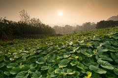 Vue de matin de coucher du soleil Ce paysage entouré par la forêt et groupe d'oreille d'éléphant poussent des feuilles Photos stock
