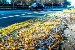 Vue de matin des feuilles congelées sur l'autoroute BRITANNIQUE Photo stock