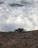Vue de mer Photo libre de droits