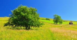 Vue de montagne en été élevé avec des meules de foin photo stock