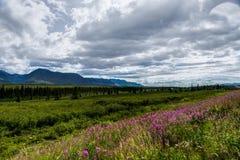 Vue de nature avec des fleurs et des arbres et ciel nuageux dans l'unité de l'Alaska Photos libres de droits