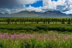 Vue de nature avec des fleurs et des arbres et ciel nuageux dans l'unité de l'Alaska Images libres de droits