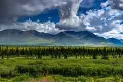 Vue de nature avec des fleurs et des arbres et ciel nuageux dans l'unité de l'Alaska Photographie stock libre de droits