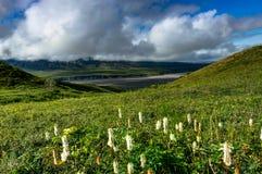 Vue de nature avec des fleurs et des nuages en parc national de Denali dans A Images stock