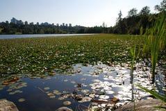 Vue de nature dans le lac de cerfs communs Photos stock