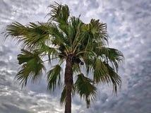 Vue de nature de palmier contre le ciel nuageux Photos stock