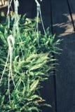 Vue de nature de plan rapproché de feuille verte Photographie stock libre de droits