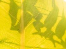 Vue de nature de plan rapproché de feuille verte dans le jardin à l'été Image libre de droits