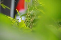 Vue de nature de plan rapproch? de feuille verte dans le jardin ? l'?t? sous la lumi?re du soleil images stock