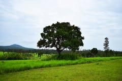 Vue de naturel Photo libre de droits