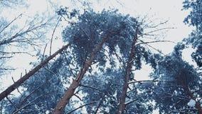 Vue de neige tombant lentement dans les arbres coniféres de forêt nature L'hiver weather banque de vidéos