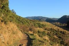 Vue de Nelson New Zealand photographie stock libre de droits