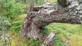 Vue de notre archipel et de sa forêt Images libres de droits