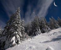 Vue de nuit des sapins couverts de neige Image stock