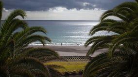 Vue de palmier avec une surveillance d'océan Images stock
