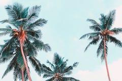 Vue de palmiers de dessous Fond tropical de photo ?t? de jungle photo libre de droits