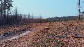 Vue de panorama de terre deforestated banque de vidéos