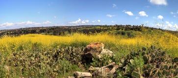 Vue de parc de région sauvage d'Aliso Viejo Photographie stock libre de droits