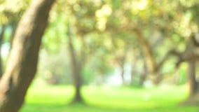 Vue de parc et mouvement brouillés de bokeh du clip vidéo de longueur d'arbre clips vidéos