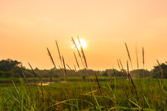 Vue de paysage avec des temps de coucher du soleil Images stock