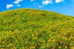 Vue de paysage de montagne de champ de diversifolia de Tithonia Image libre de droits