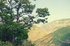 Vue de paysage de montagne des collines et du grand arbre Photos stock