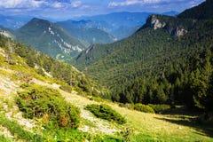 Vue de paysage de montagnes de forêt Image stock