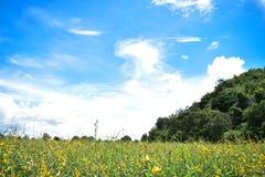 Vue de paysage, fleurs jaunes, montagnes et beau ciel pendant le matin photographie stock