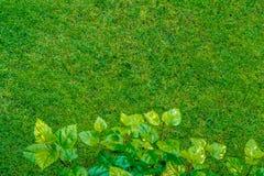 Vue de pelouse d'herbe verte bien que l'usine pousse des feuilles, fond naturel photographie stock libre de droits