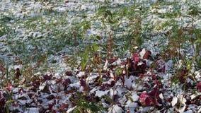 Vue de pelouse verte couverte de première neige banque de vidéos