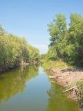 Vue de petit canal dans une forêt de palétuvier Photos stock
