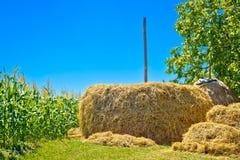 Vue de pile de foin et d'été de champ de maïs images libres de droits
