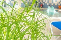 Vue de piscine d'intérieur de bébé Image libre de droits