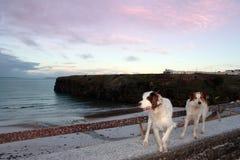 Vue de plage de l'hiver avec deux crabots Photos libres de droits