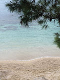 Vue de plage de pin de côté de mer Images libres de droits
